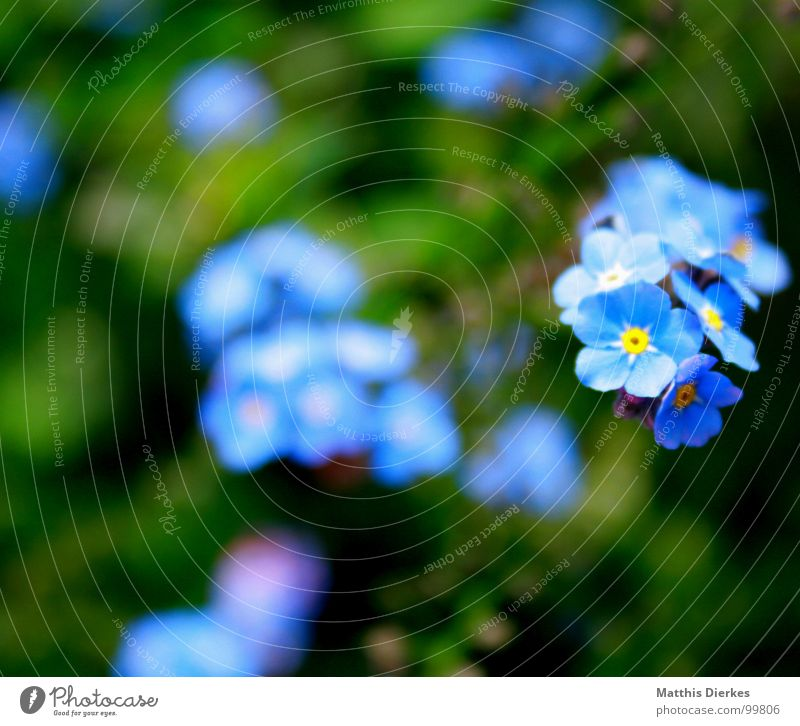 SHINING III Flower Blossom Blur Glittering Glimmer Hover Black Yellow Forget-me-not Balcony Plant Breathe Air Grass Green Meadow Fluorescent substance Atoms