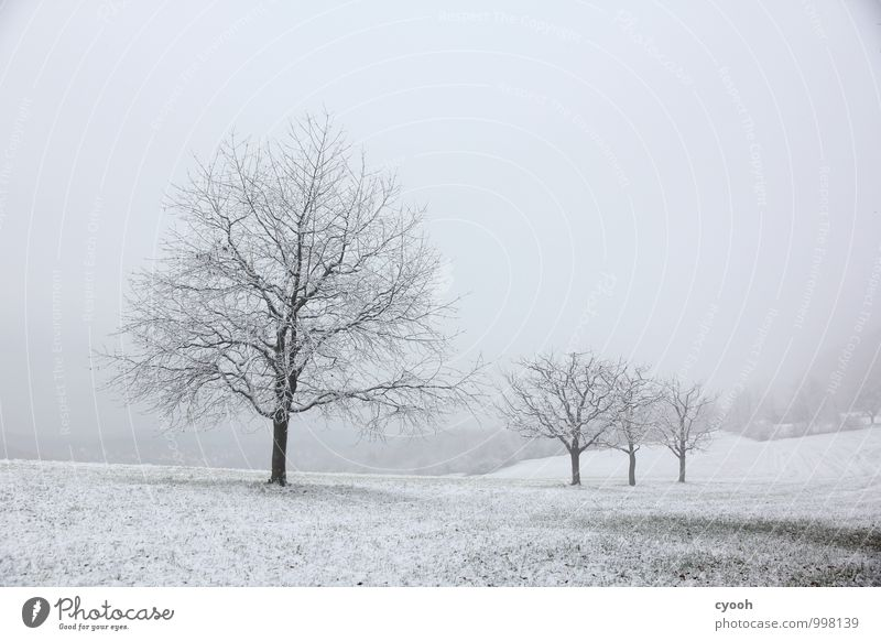 grey in grey Landscape Winter Bad weather Snow Snowfall Tree Meadow Dark Cold Gloomy Black White Sadness Loneliness Nature Calm Stagnating Moody Time Snowscape