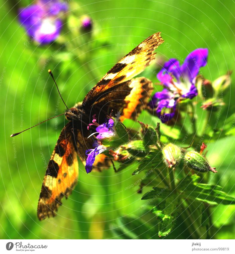 Nature Beautiful Flower Plant Nutrition Animal Blossom Spring Legs Orange Food Flying Violet Wing Insect Pelt