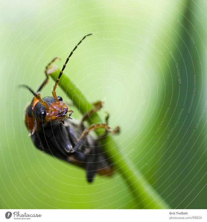 Look, this is how it works! Insect Meadow Blade of grass Green Posture Beetle Looking Lawn