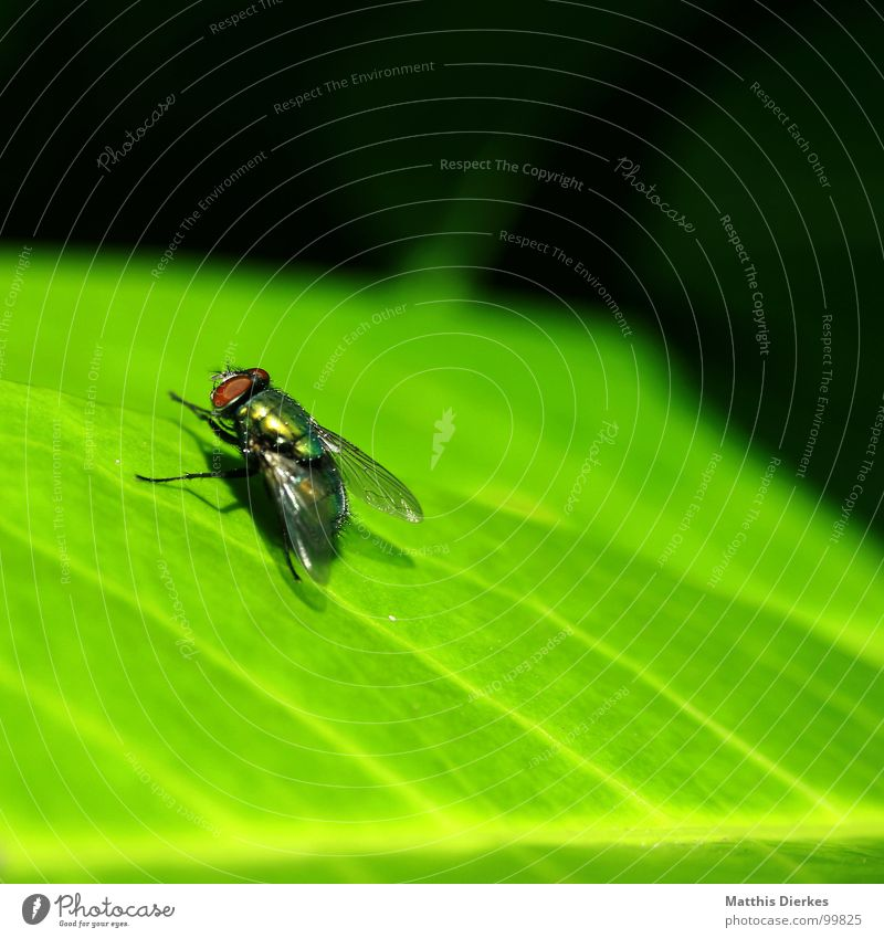 Green Summer Animal Leaf Small Flying Wait Fly Beginning Wing Break Cleaning Living thing Bee Insect Sunbathing