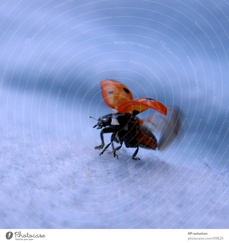 Nature Blue Red Black Animal Movement Grass Happy Small Orange Walking Flying Success Beginning Speed Wing