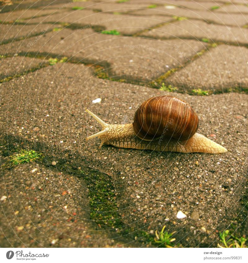 Postcard for sto.E Snail Crawl Slowly Animal Vineyard snail Air-breathing land snail House (Residential Structure) Snail shell Inhabited Slimy Mucus
