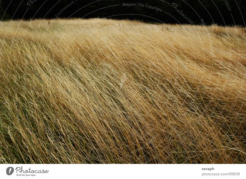 Grassland Nature Plant Landscape Meadow Blossom Natural Background picture Wild Wind Stalk Blade of grass Seed Marsh grass Knoll