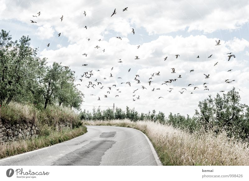 Sky Nature Plant Summer Tree Landscape Clouds Animal Environment Warmth Street Bright Flying Bird Field Wild animal