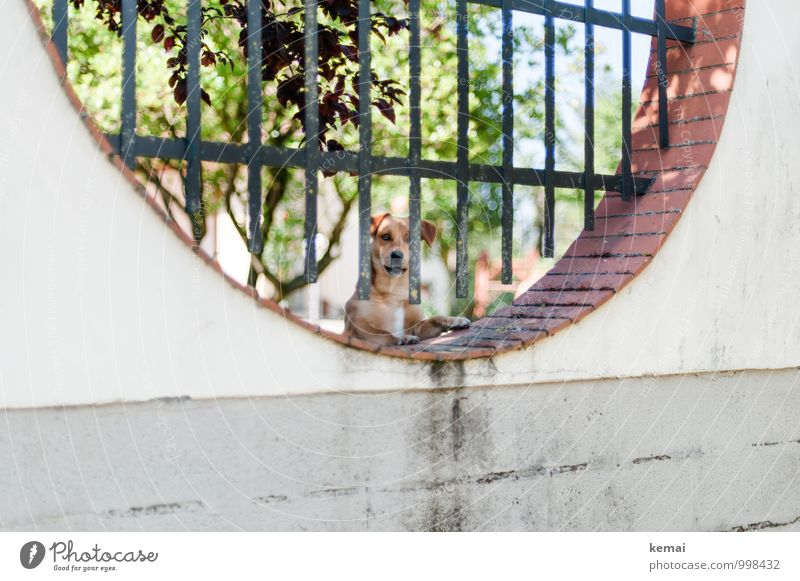 We don't buy anything Tree Wall (barrier) Wall (building) Fence Pet Dog Animal face Watchdog 1 Looking Bright Watchfulness Protection Vertical Round