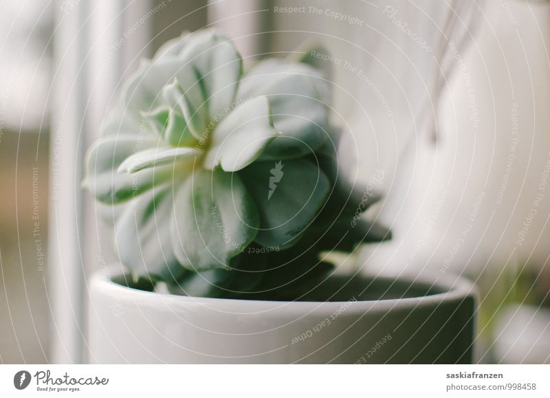 Soft light. Plant Foliage plant Exotic Bright Nature Natural Gray Green White Pure Transience Succulent plants Subdued colour Interior shot Deserted Day Light