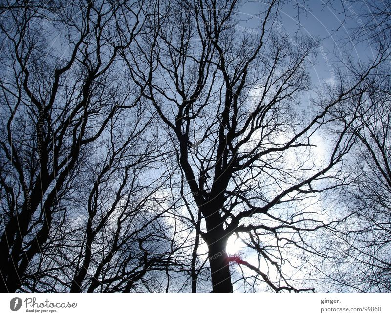twig at dawn Nature Sky Tree Above Reticular Visual spectacle Branch Twigs and branches Leafless Silhouette Branchage Sun Clouds Winter Deciduous tree ramified