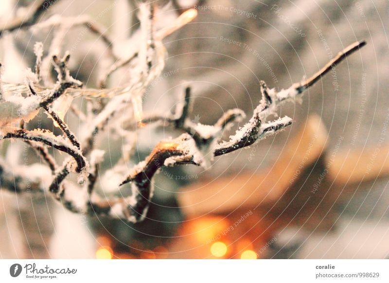 winter's tale Winter Snow Branch Dream Snowfall Artificial snow Decoration Enchanting Star (Symbol) Christmas & Advent Winter light Fairy lights Mysterious