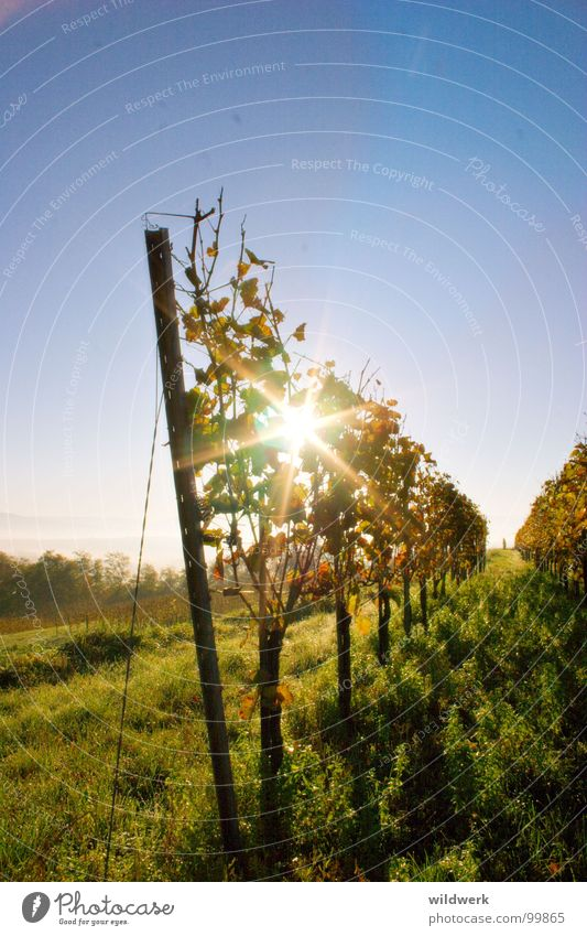 Blue Green Sun Autumn Vine Alcoholic drinks Kaiserstuhl