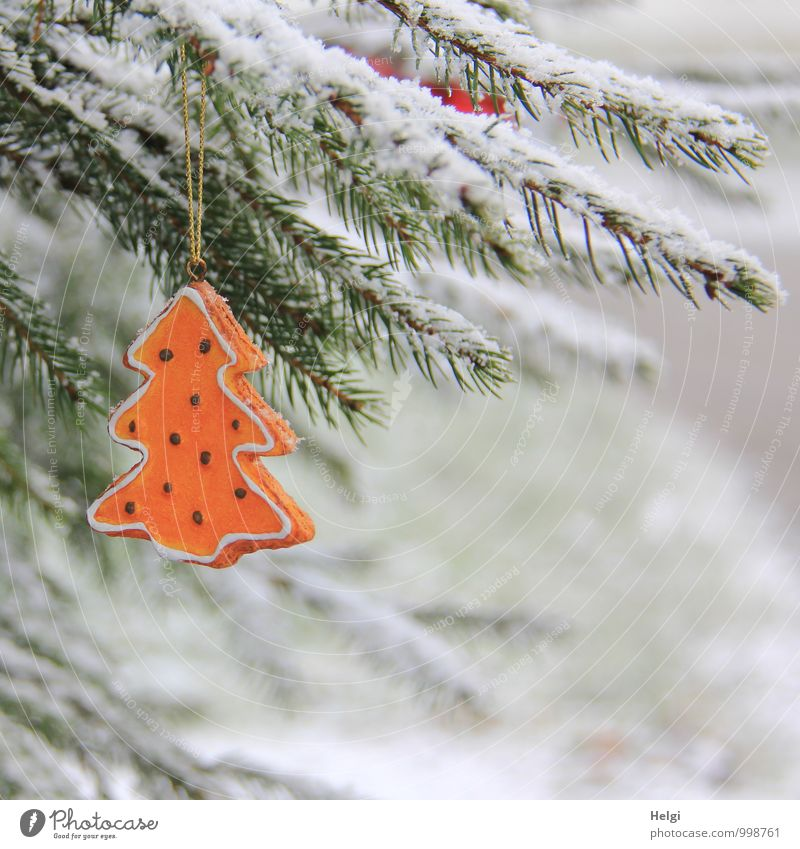 Christmas tree in the snow... Christmas & Advent Environment Nature Plant Winter Snow Tree Wild plant Spruce Twig Fir needle Meadow Decoration Sign Freeze Hang