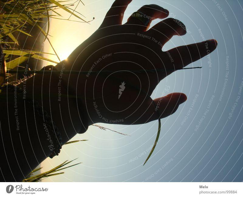 Hand Sky Sun Green Blue Grass Fingers Trust Blade of grass