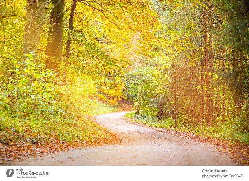 Dreamy forest path Harmonious Relaxation Vacation & Travel Environment Nature Landscape Earth Sunlight Autumn Beautiful weather Tree Forest Lanes & trails