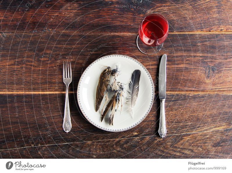 Red Animal Death Food photograph Bird Lie Feather Nutrition Broken Living thing Wing Wine Restaurant Plate Meal Meat