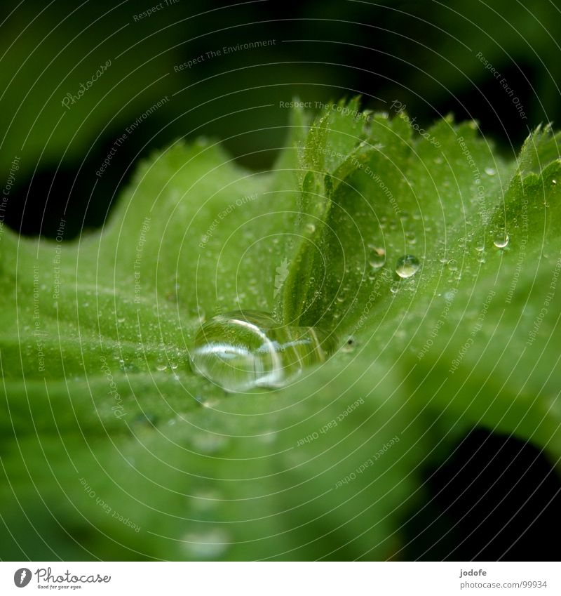 Nature Plant Green Summer Water Leaf Autumn Spring Garden Rain Fresh Drops of water Wet Rainwater Clarity Pure