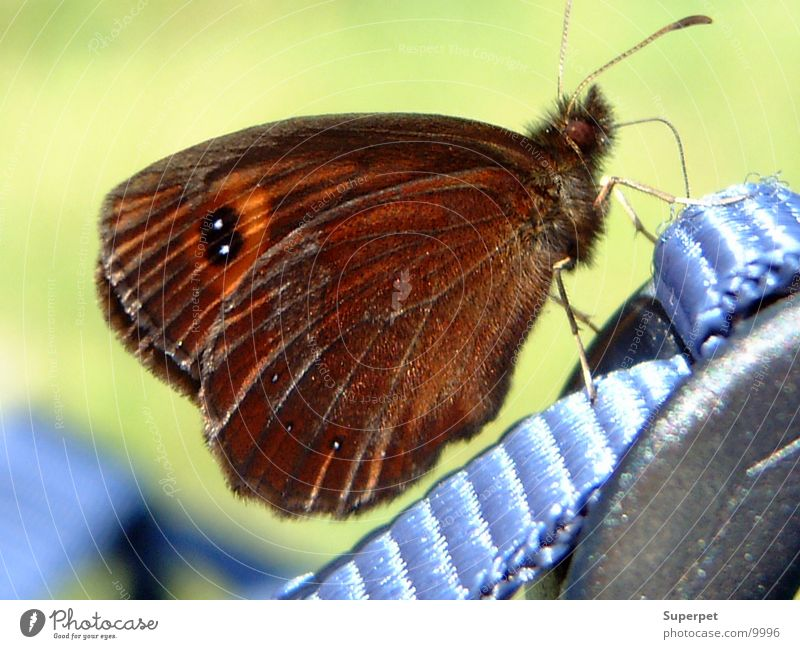 cuddly Butterfly