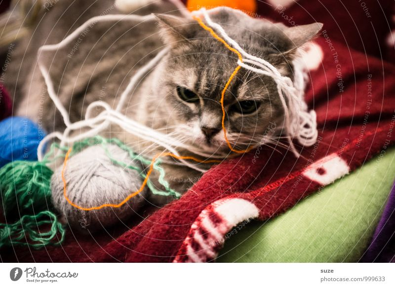 Cat Joy Animal Playing Moody Leisure and hobbies Contentment Cute Break Animalistic Pet Anticipation Boredom Blanket Sewing thread Cuddly