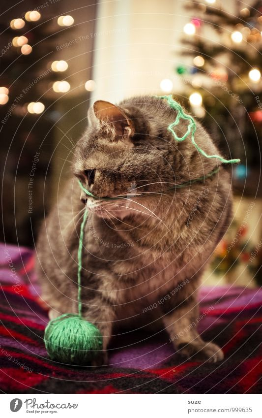 Oh, lost thread ... Leisure and hobbies Playing Feasts & Celebrations Christmas & Advent Animal Pet Cat 1 Cute Moody Joy Contentment Anticipation Festive