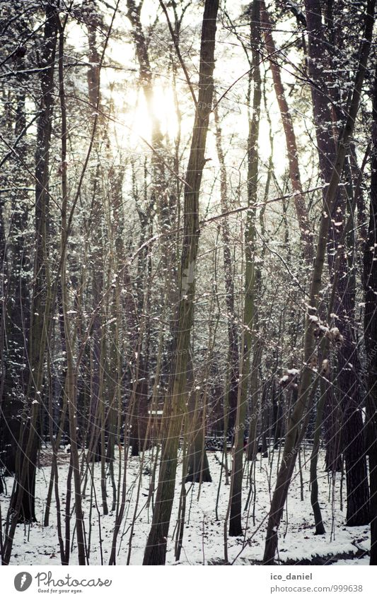 Winter Forest III Environment Nature Plant Beautiful weather Ice Frost Snow Snowfall Tree Romance Calm Style Subdued colour Exterior shot Deserted Twilight