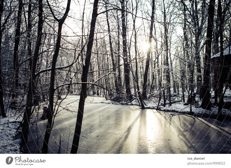 Winter Forest I Vacation & Travel Adventure Freedom Snow Winter vacation Environment Nature Landscape Plant Water Sunlight Ice Frost Snowfall Observe Movement
