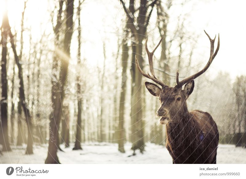 Nature Beautiful Sun Relaxation Animal Winter Forest Movement Snow Happy Brown Snowfall Wild animal Tourism Authentic Climate