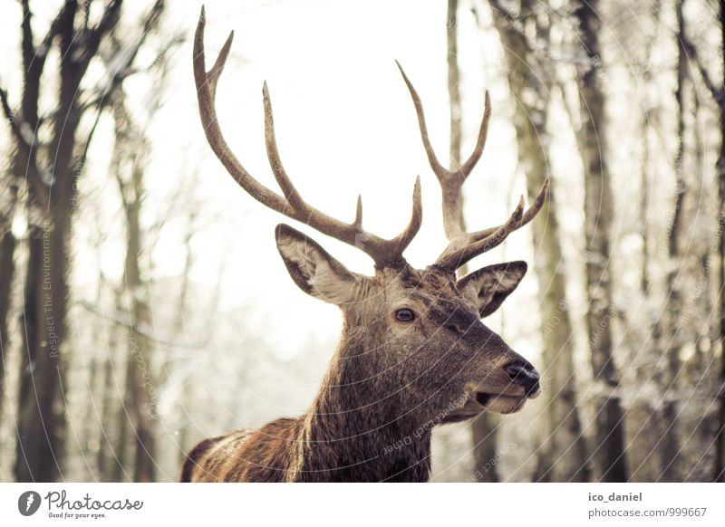 Animal Elegant Wild animal Esthetic Observe Near Hunting Zoo Deer Sunbeam