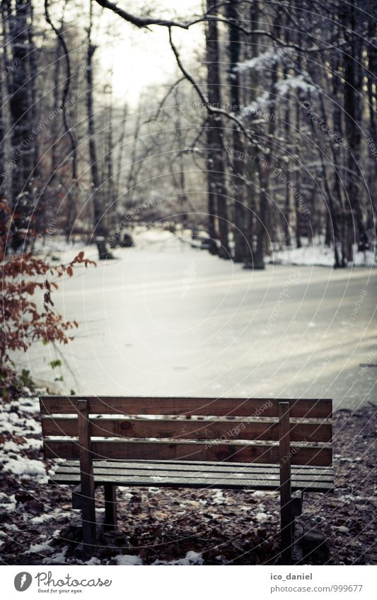 Nature Vacation & Travel Relaxation Landscape Loneliness Calm Winter Forest Sadness Emotions Happy Think Freedom Moody Dream Park