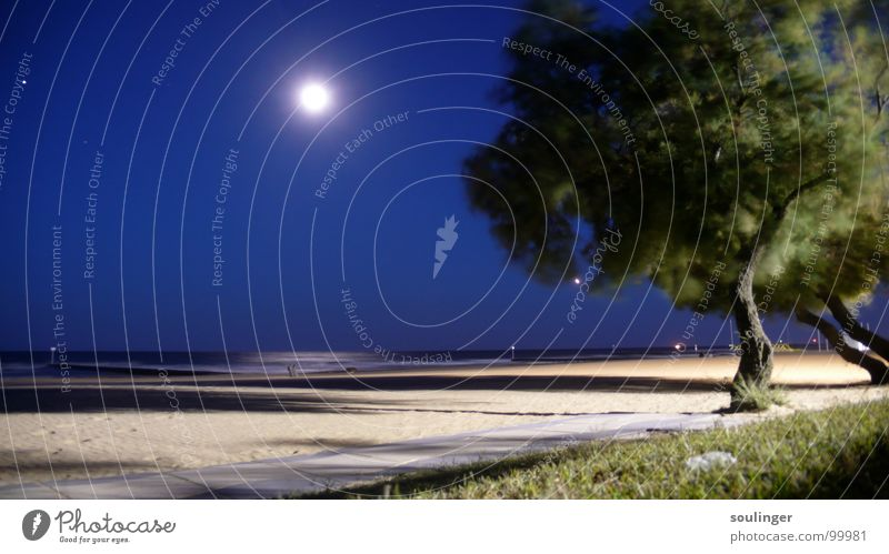 nocturne Beach Tree Ocean Coast Moon Wind Nature Sand Evening